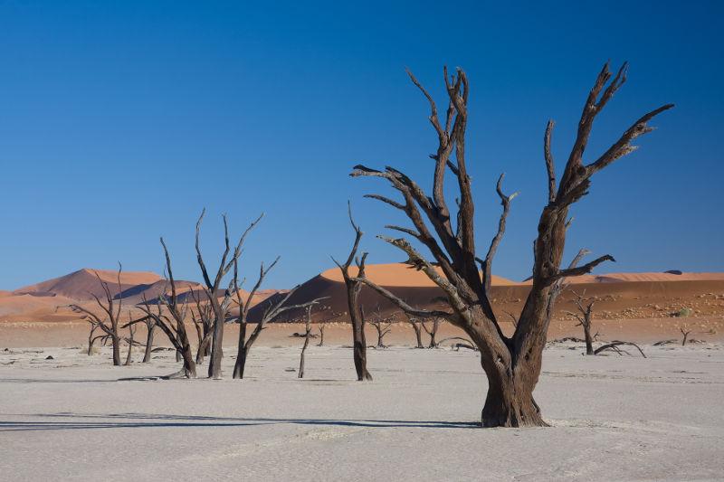 Foto desierto arboles viejos