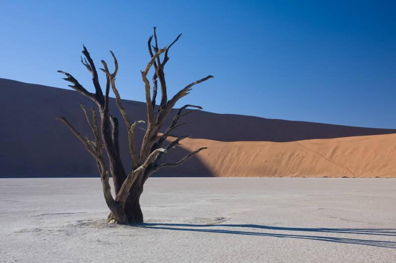 Fotos desierto con arboles secos