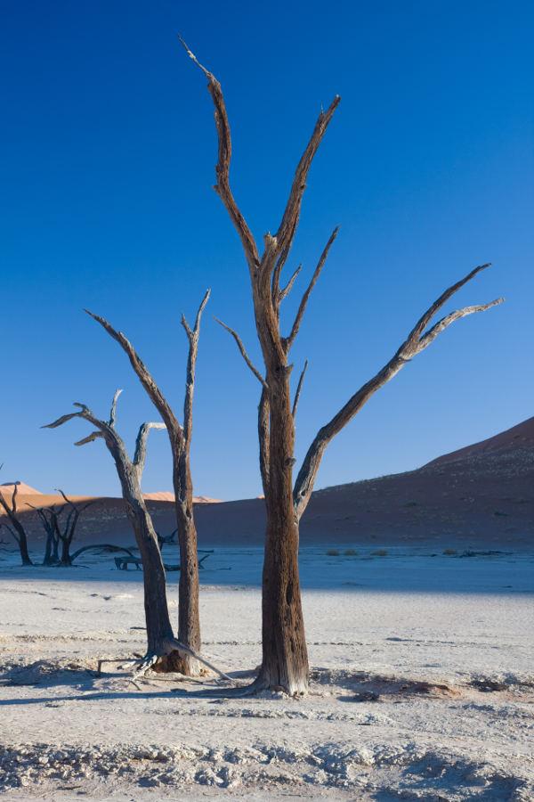 Arbol seco desierto calidad alta