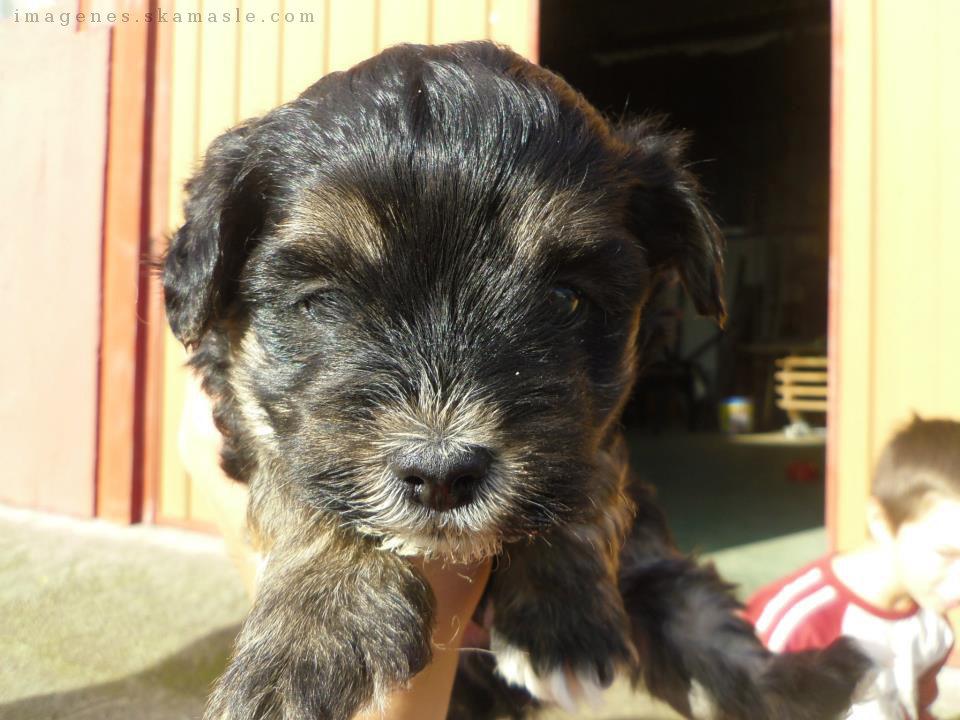 Foto Cachorro Negro