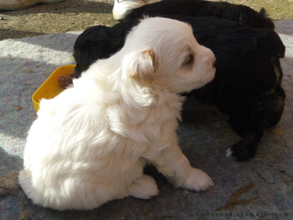 Foto Cachorros Comiendo