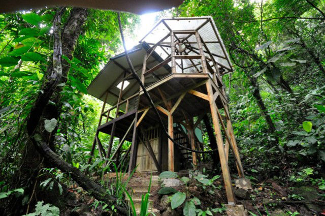 http://mirror.skamasle.com/img/casaarbol/Sustainable-TreeHouse5-640x425.jpg