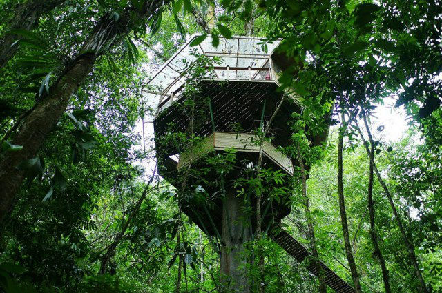 http://mirror.skamasle.com/img/casaarbol/Sustainable-TreeHouse7-640x425.jpg