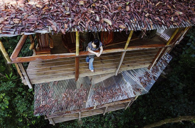 http://mirror.skamasle.com/img/casaarbol/Sustainable-TreeHouse8-640x420.jpg