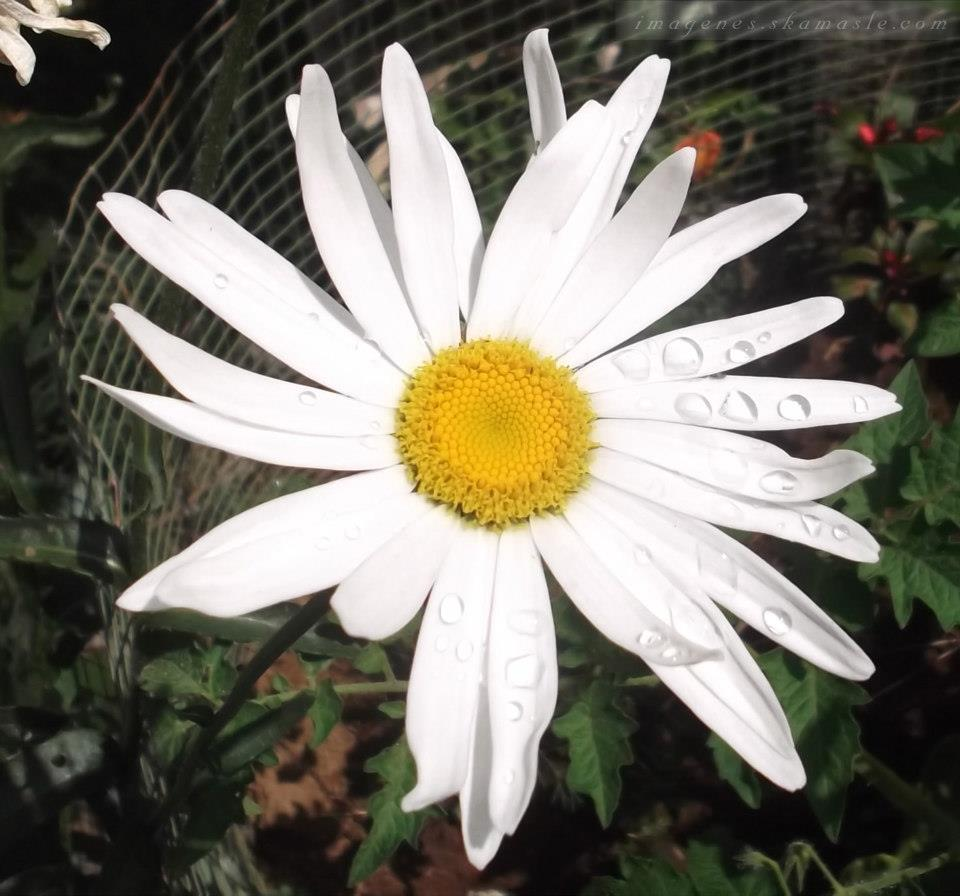 Foto flores con gotas de agua