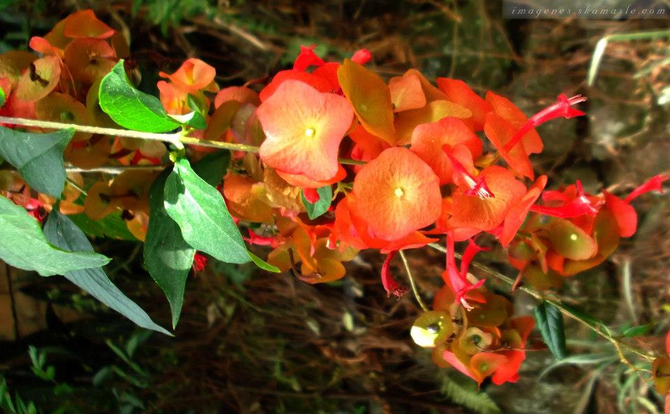 Fotos flroes naranjas