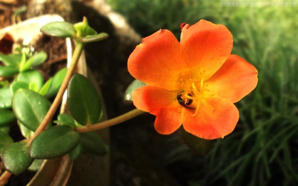Foto For Anaranjada