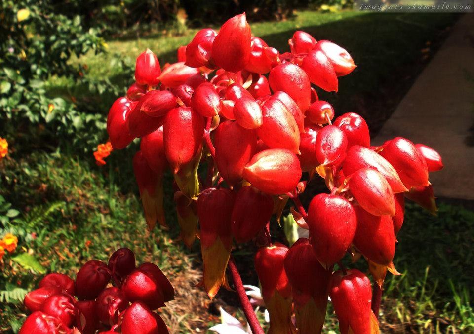 Foto flor Roja Calidad Alta