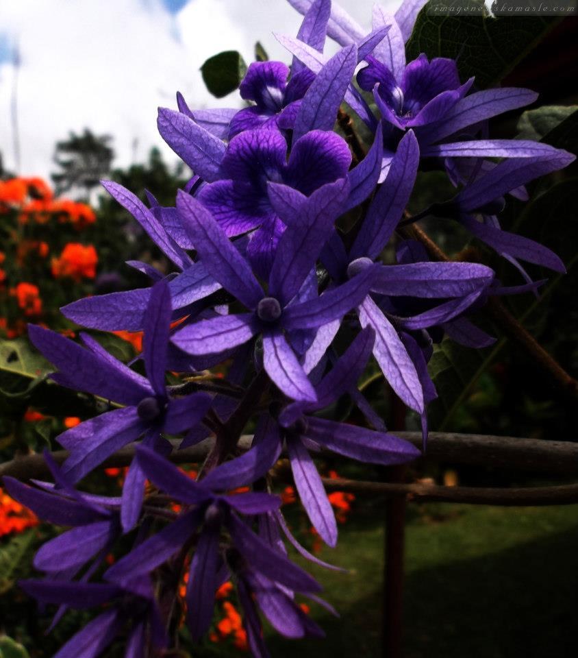 Fotos Flores Calidad Alta