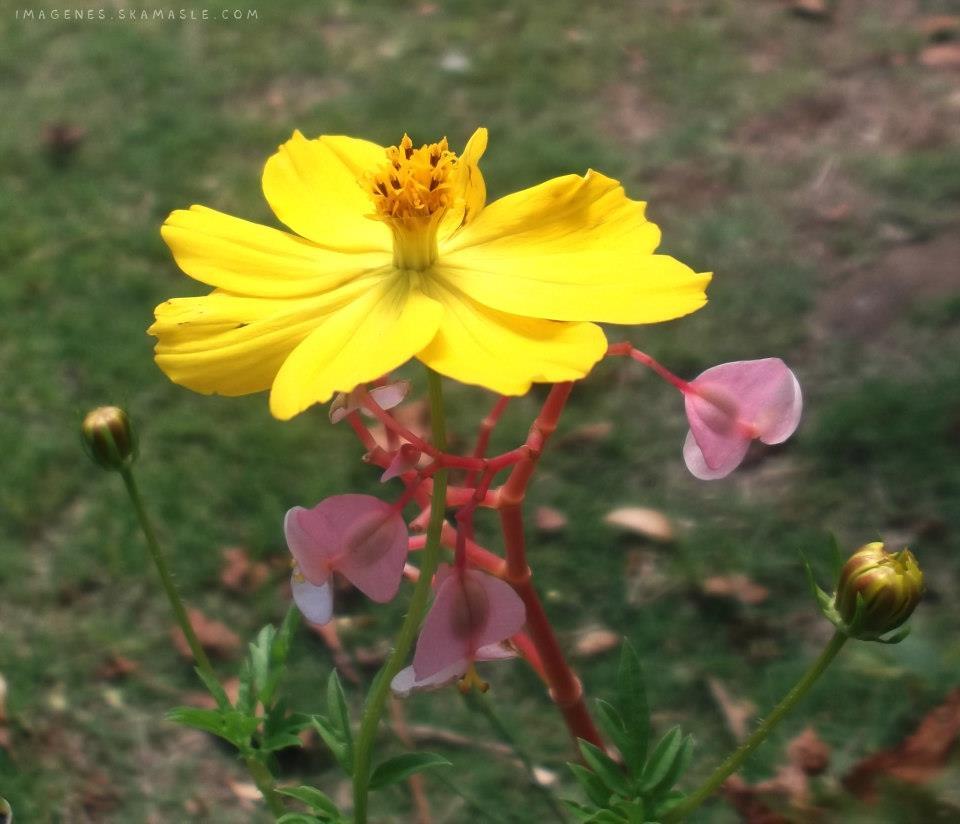 Flor Amarilla Calidad Alta