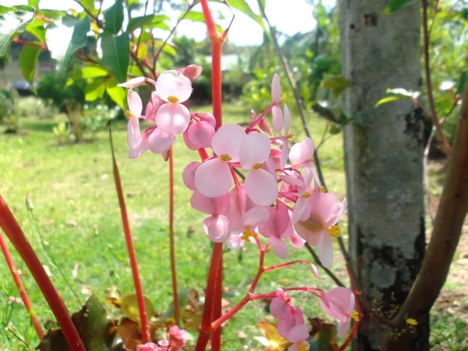 Flores Rosadas Pequeñas
