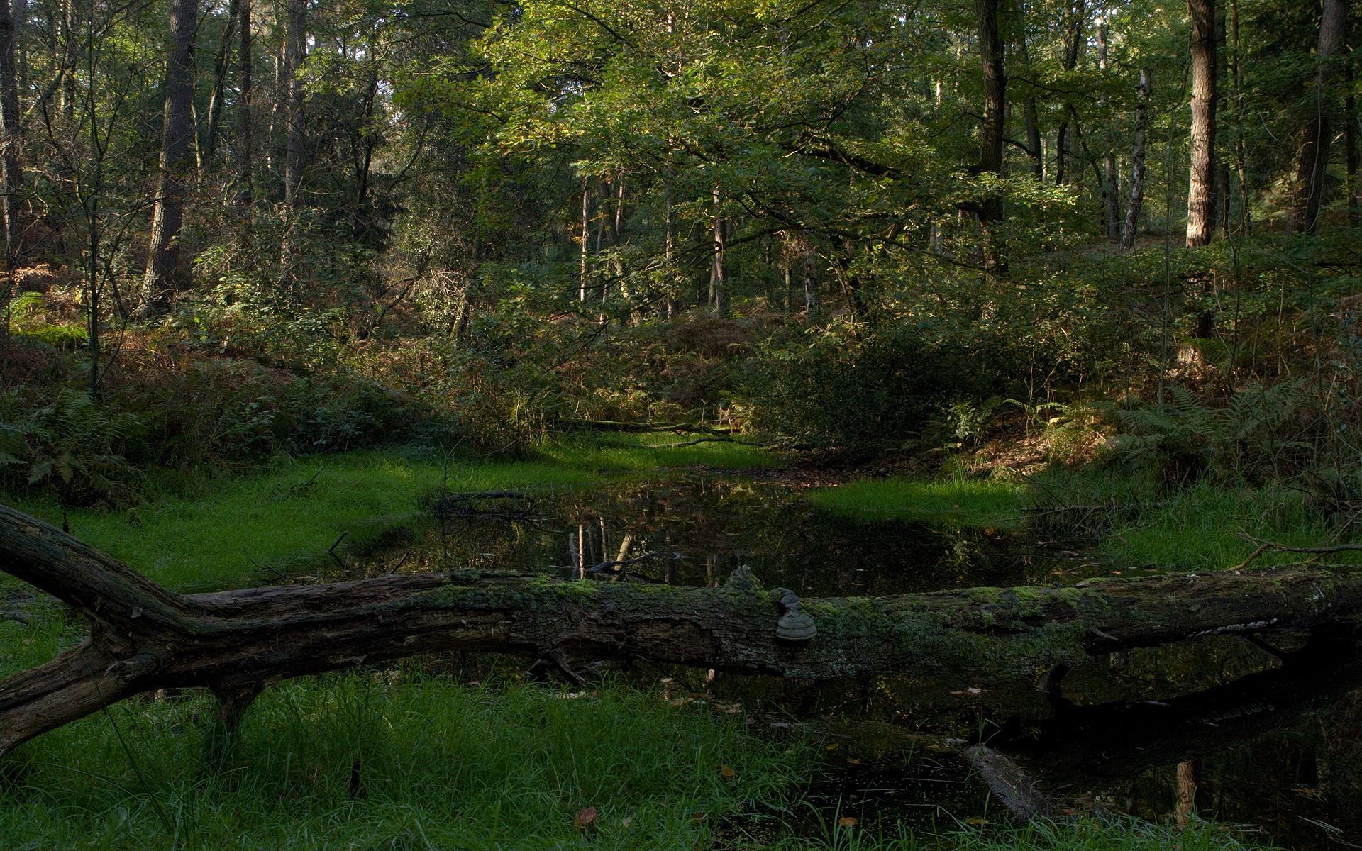 Fondo de pantalla bosque HD