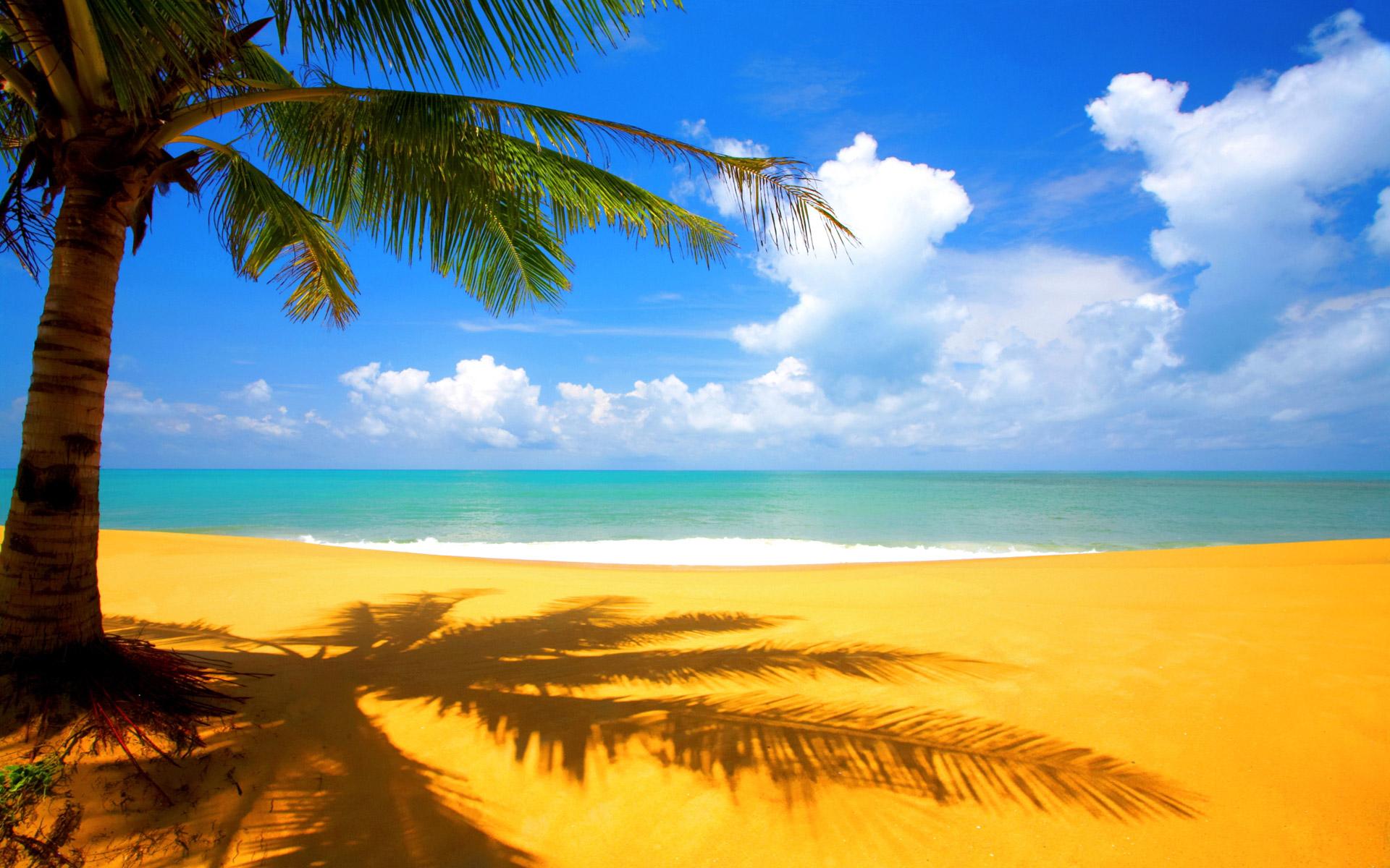 Foto Palmera en la Playa