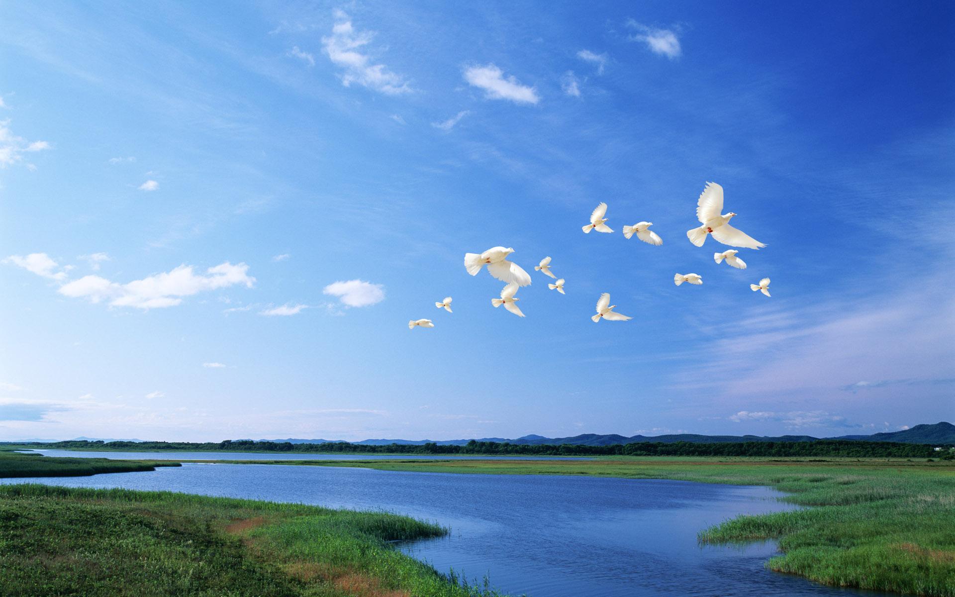 Fotos palomas Blancas