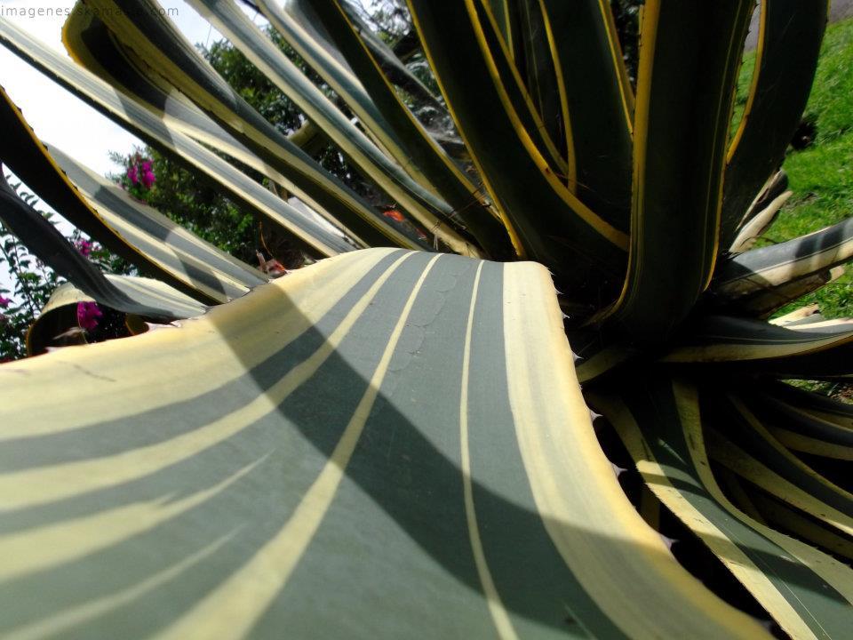 Foto Profundidad Hoja de Planta