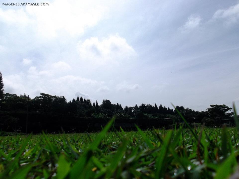 Foto tomada arras de la hierba
