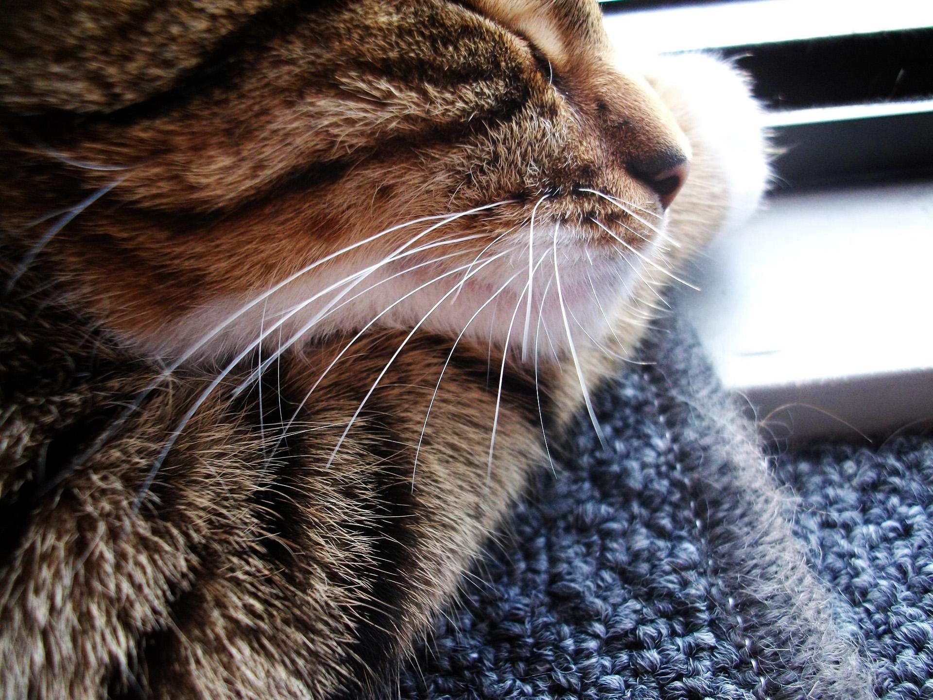 Foto Gato en HD