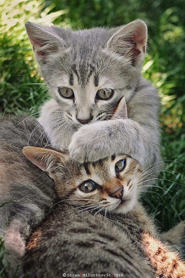 Foto gato gris abrazando