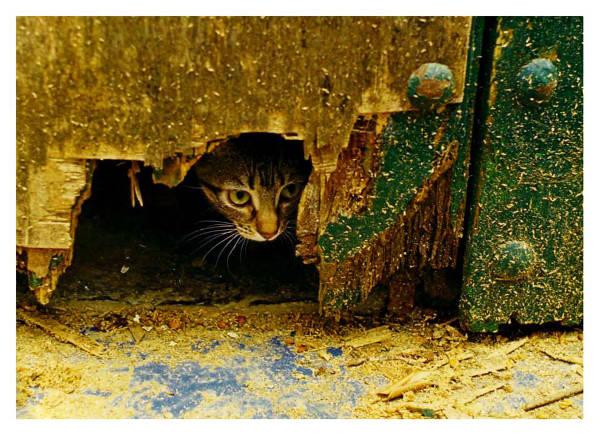 Foto gato asomandose
