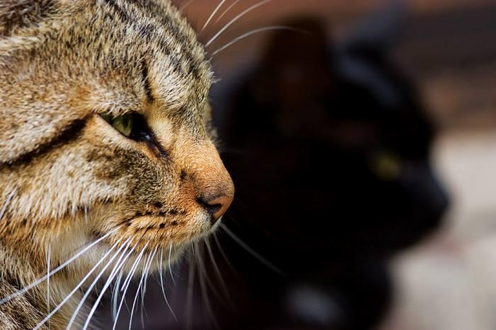 Foto gato mirando