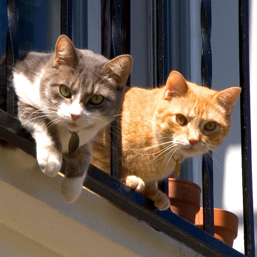 Foto gato mirando por la ventana