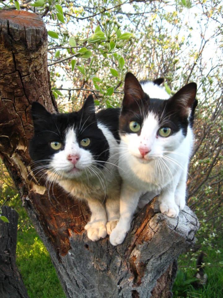 Foto dos gatos