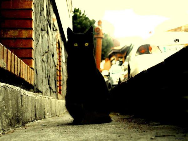 Foto gato negro en la calle
