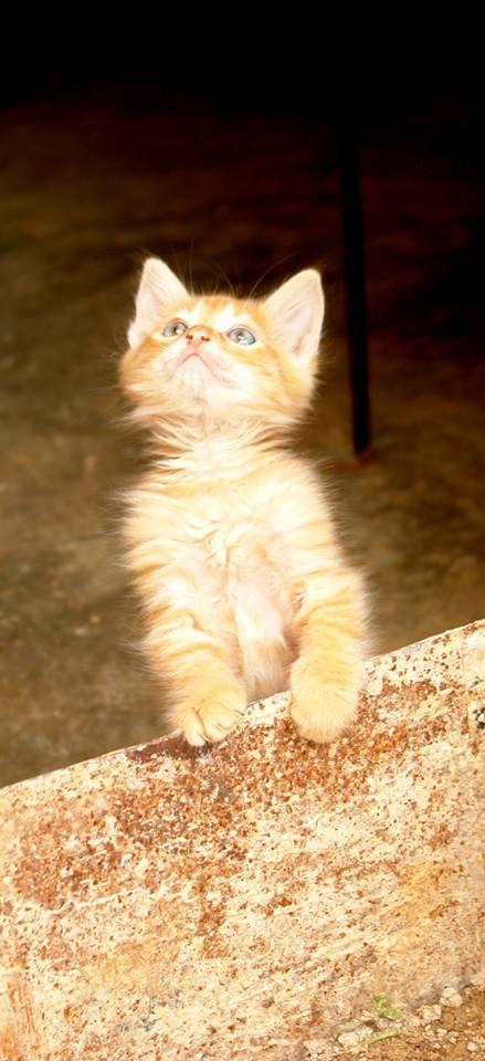 Gato mirando foto
