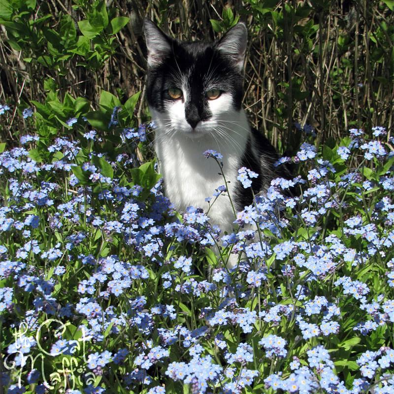 Gato entre las flores foto