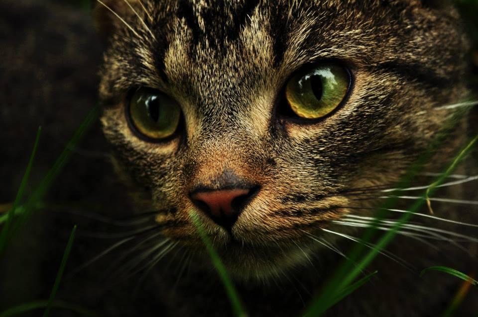 Foto mirada de gato