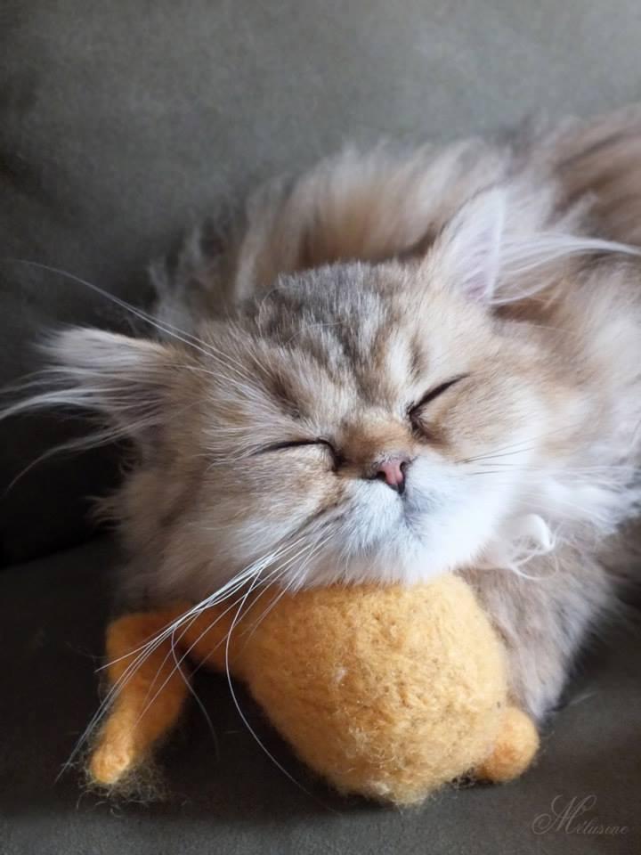 Foto gato dormido