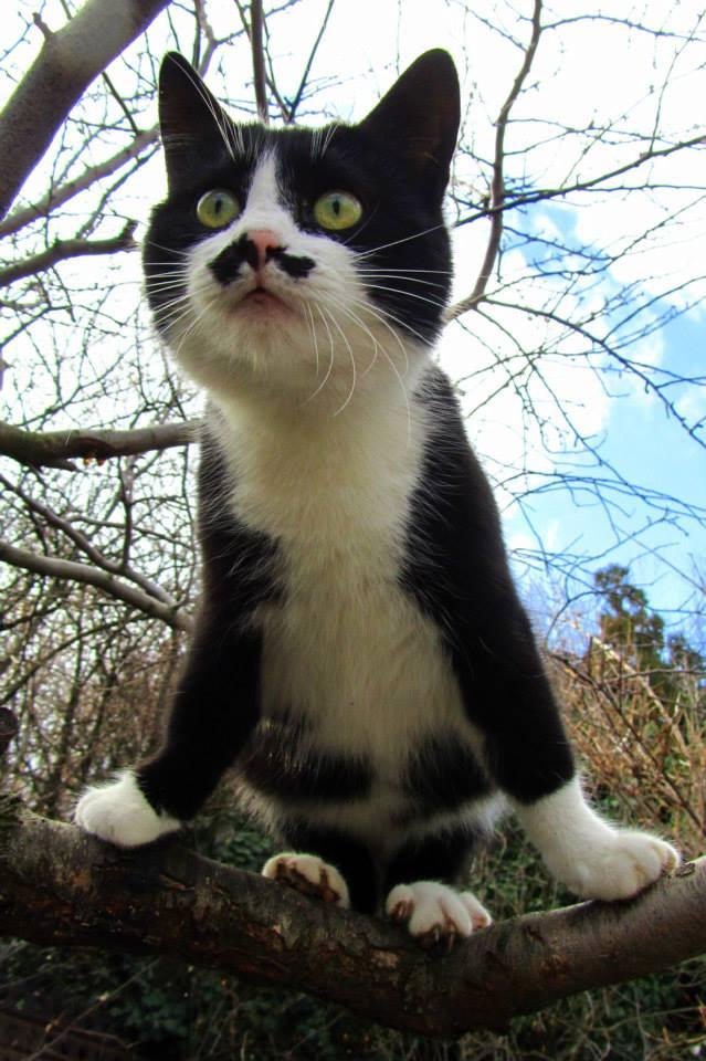 Foto gato con bigote