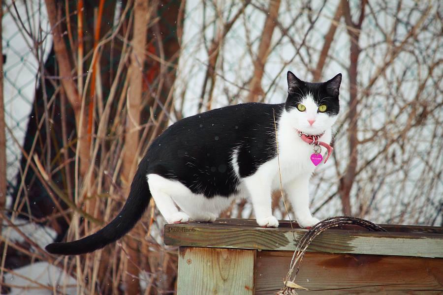 Gato y nieve foto