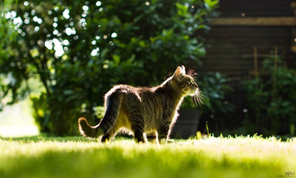 Foto gato al asecho