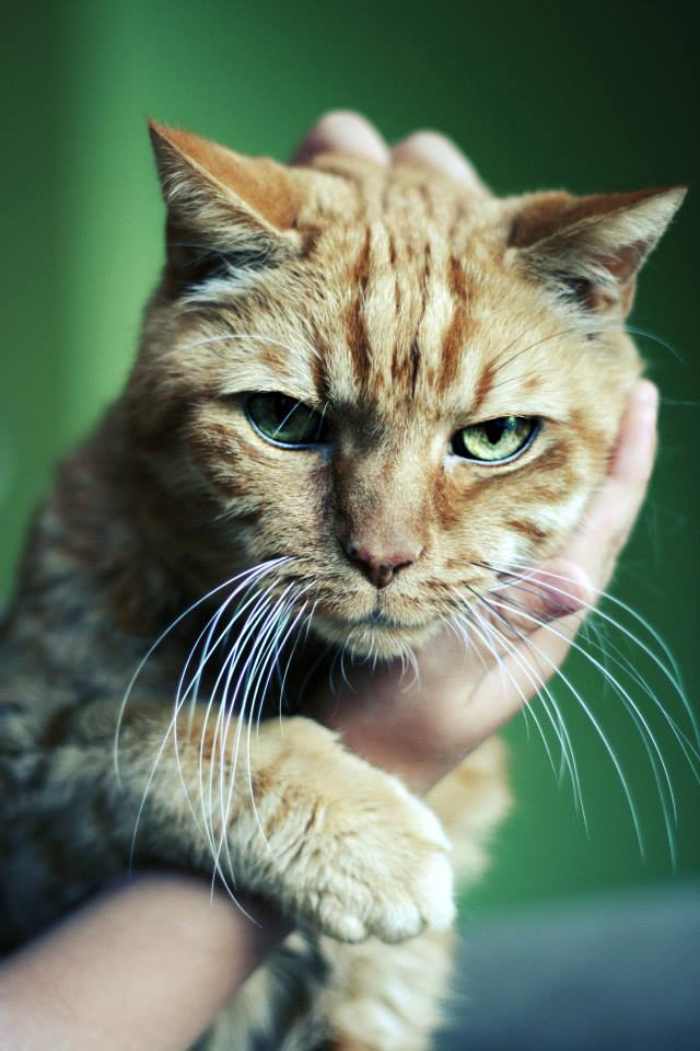 Foto gato calidad alta