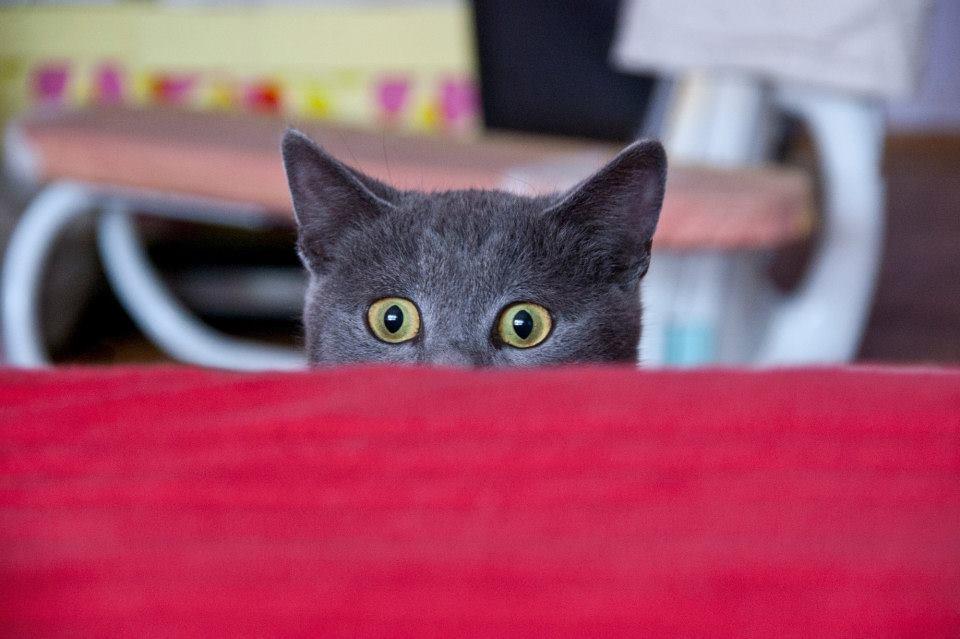 Foto el gato espia