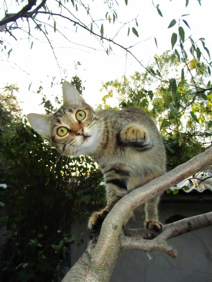 Foto gato en una rama