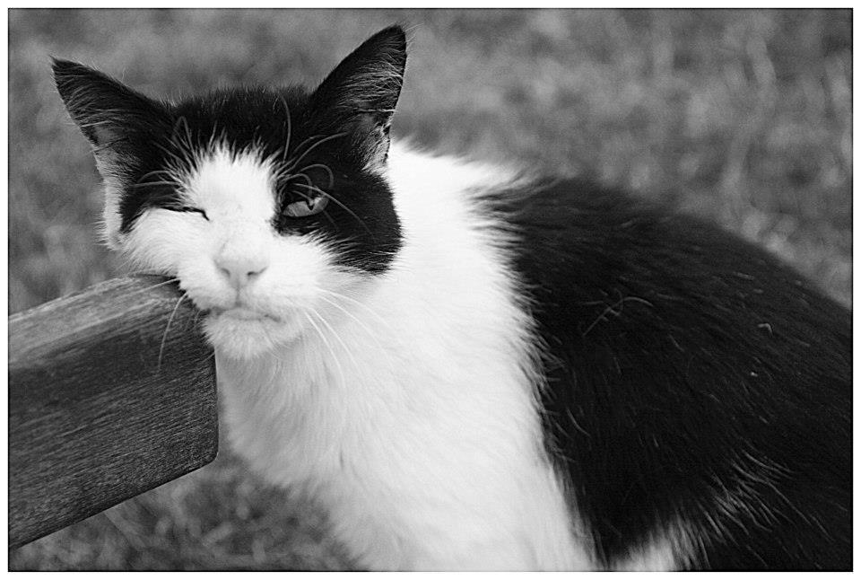 Foto gato aburrido