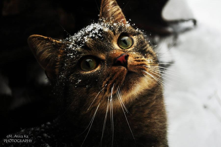 Fotografía gato en la nieve