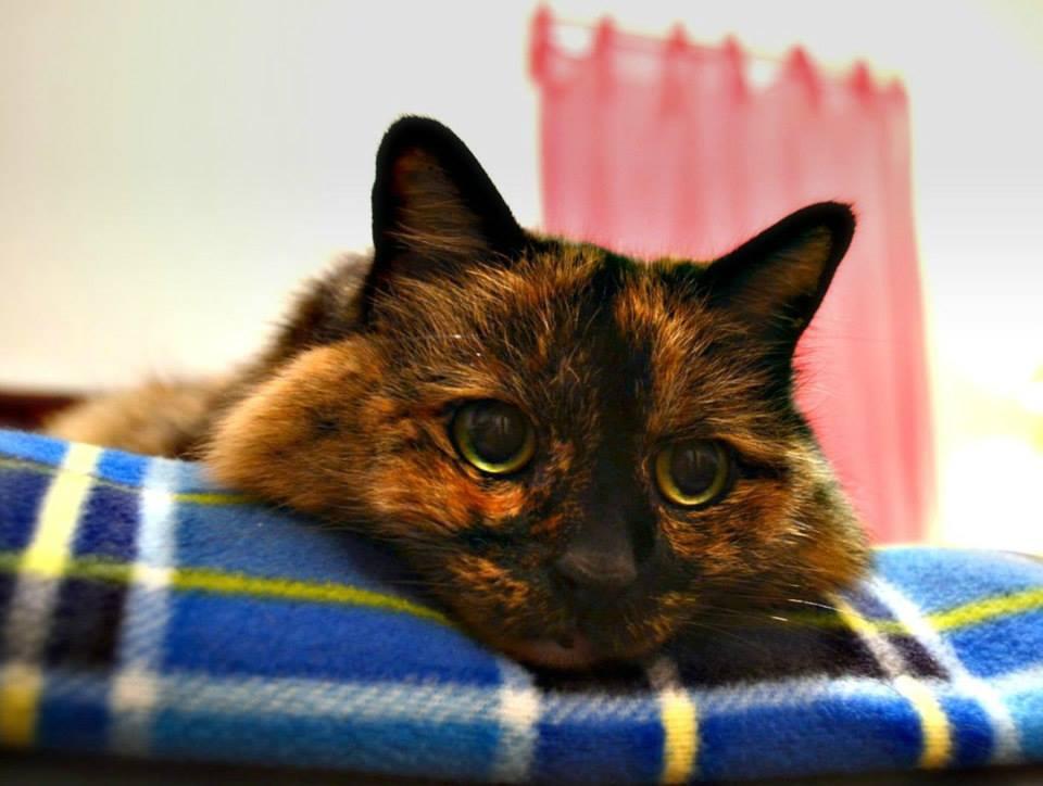 Foto gato marron