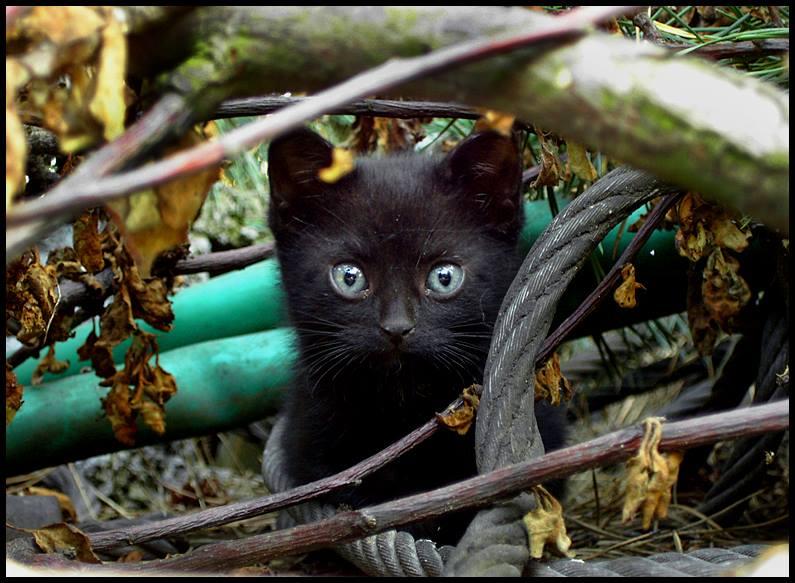 Foto gato negro entre ramas