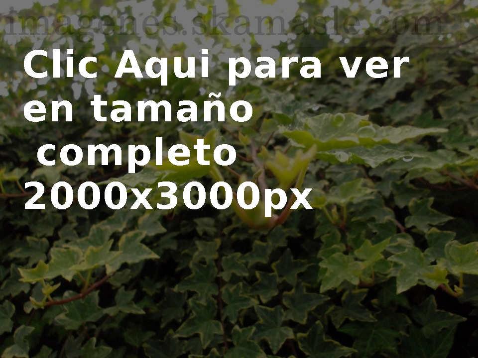Fotos Gotas de Agua en Hojas, Calidad Alta
