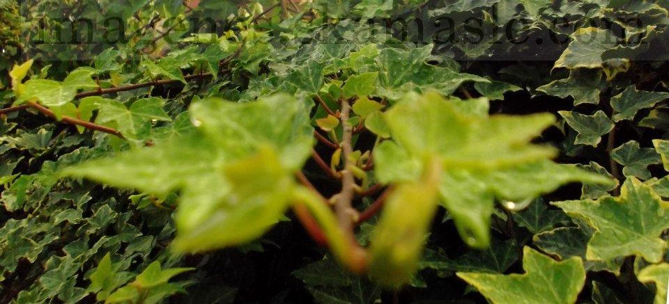 Foto hojas con Gotas de Agua
