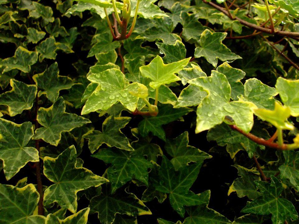 Imagen hojas con gotas de agua calidad alta