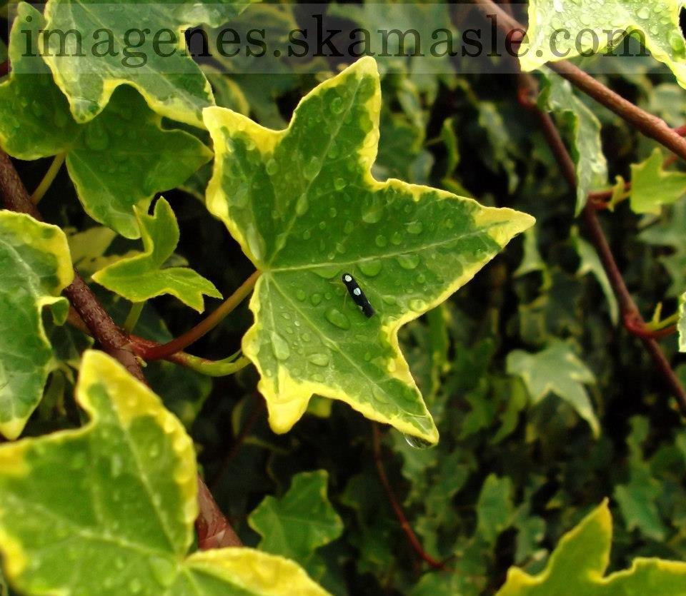 Foto Insecto en Hoja con gotas de agua