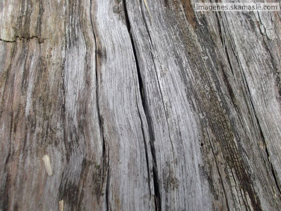 Foto de madera agrietada