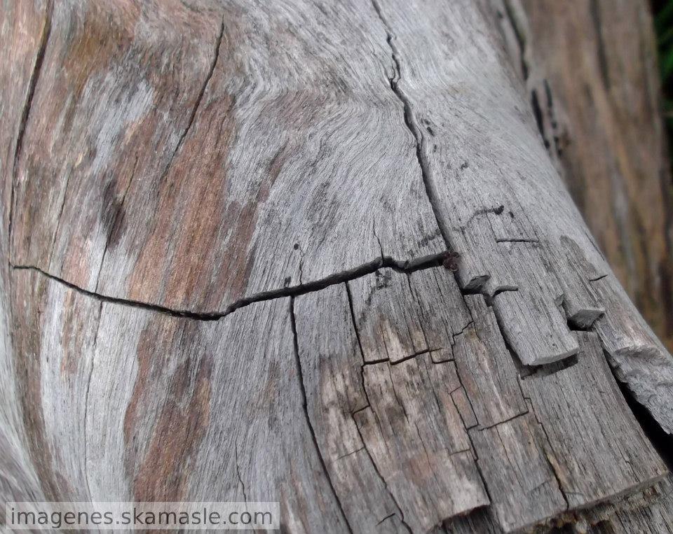 Fotos de ranuras en madera