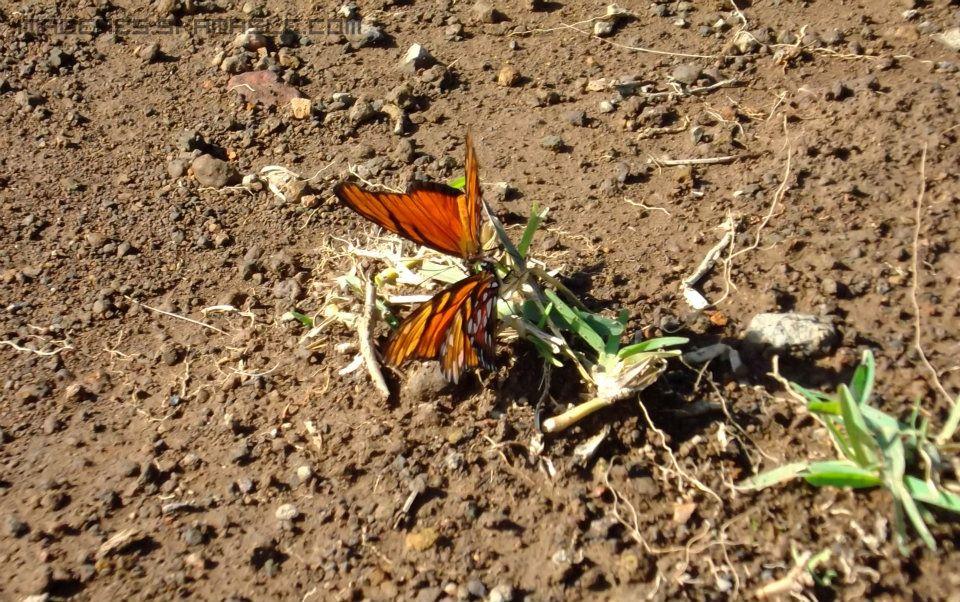 Fotografía Pareja de Mariposas