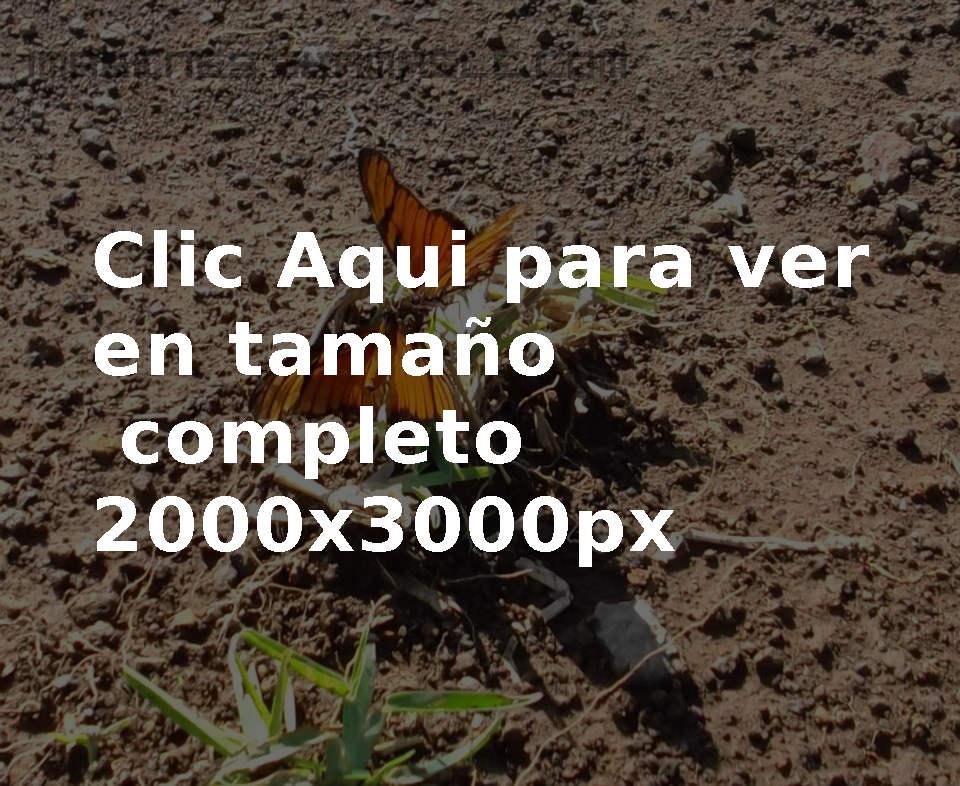 Foto Mariposas
