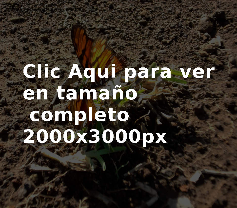 Fotografía Mariposas